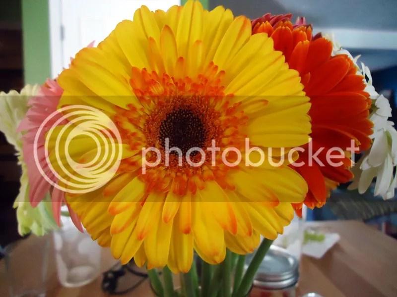 daisies01