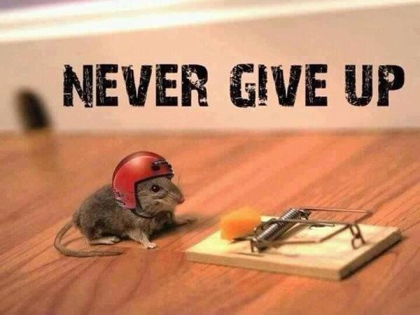 Never give up. Picture Quote #1
