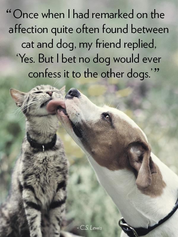 Pitbull Dog Quotes And Sayings