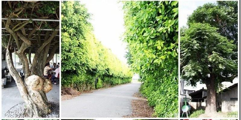 深度旅遊 【雲林元長。風土好生活】鹿北社區的唯美秘境 叫人驚嘆的榕樹牆