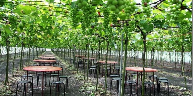 溪湖。小旅行 【東螺溪自然生態教育園區】葡萄園下的美食饗宴 綠色隧道的慢活旅程