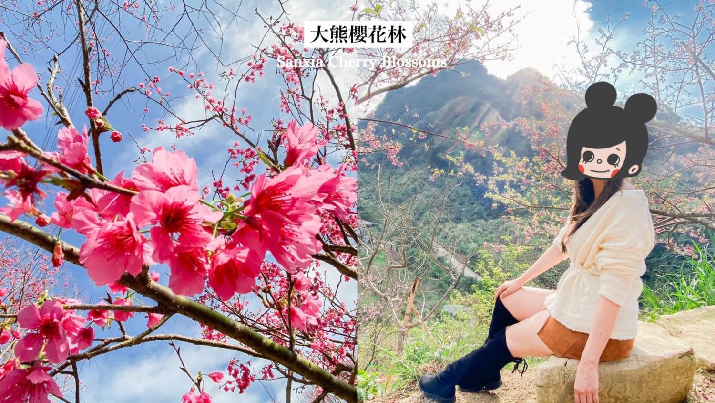 三峽大熊櫻花林-含交通門票 新北三峽景點 四色櫻花齊爆發的賞櫻秘境 仙氣美照就醬拍!