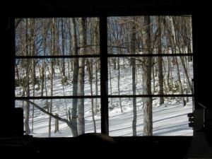 窓から見た阿寒の森の風景