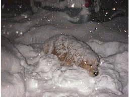 さらに雪に埋まっていくクッキー