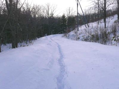 鹿の足跡を辿って歩く