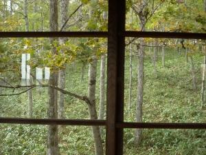 窓から見た秋の阿寒の森