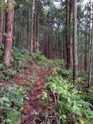 五合庵途中の山道