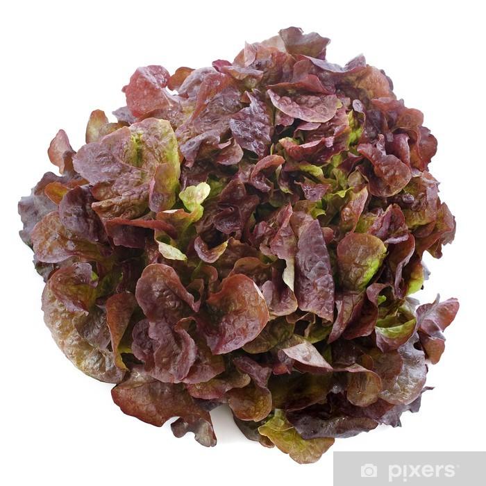 https pixers de aufkleber salade feuille de chene rouge 46528910