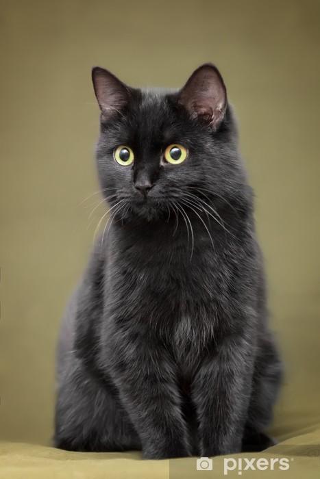 Fototapete Schöne Schwarze Katze Mit Gelben Augen Auf Decke Sitzend