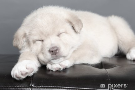 Sleepy Puppy Wall Mural • Pixers® - We live to change