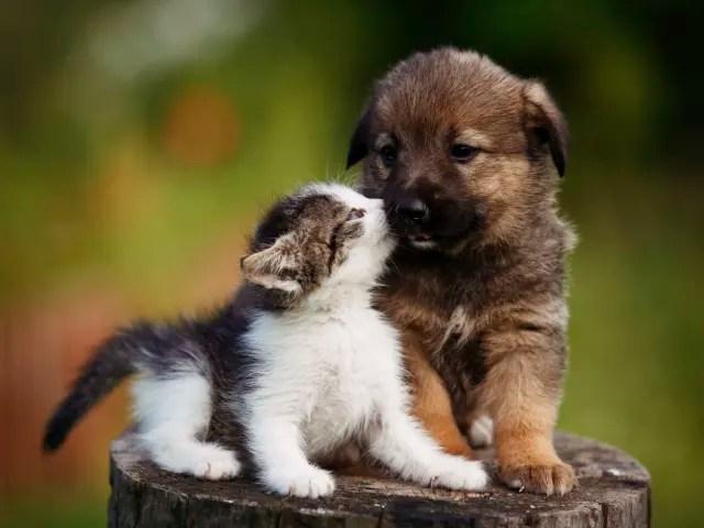 Los perros aman a sus amigos y muerden a sus enemigos