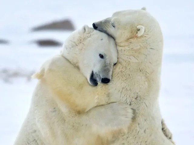 Image result for winter animals