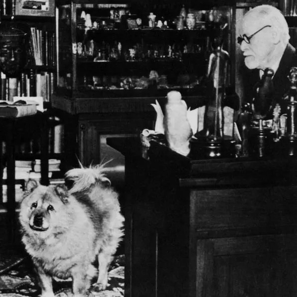"""Uno de sus perros, """"Jofi"""" se volvió tan importante en las consultas, que el psiquiatra Roy Grinker, cuenta que una vez estaban en medio de una consulta y todos los comentarios que hacía Freud los unía a la opinión de su perro. Por ejemplo: Jofi está contento de que mejoraras tu ansiedad. Jofi no está muy feliz con lo que estás diciendo. Todo ocurrió cerca de 1932."""