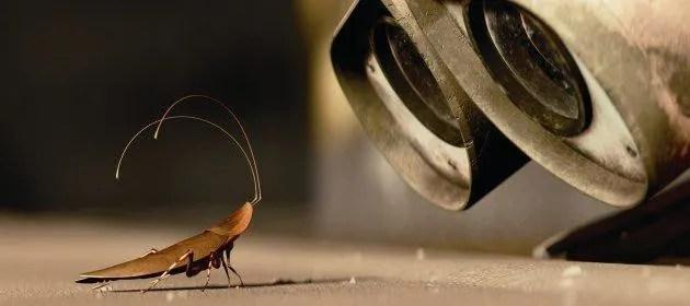 """Las cucarachas pueden vivir incluso en las peores condiciones. (La foto es una escena de la película de Disney """"Wall-E"""", en la que un robot vive solo en un planeta abandonado y por casualidad, se encuentra una cucaracha)."""