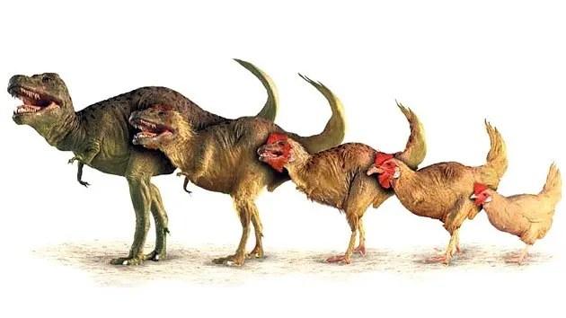 «La aves son el único linaje de los dinosaurios que logró esquivar la extinción en masa al final de la llamada edad de los Dinosaurios». Ed Braun, científico de la Universidad de Florida.-