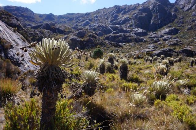 Este dato indica que, aunque son apenas menos del 3 por ciento de territorio del país, albergan el 17 por ciento de diversidad de flora del país.