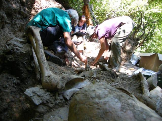 Exhumación de un fosa de represaliados de la Guerra Civil española, por la Asociación para la Recuperación de la Memoria Histórica