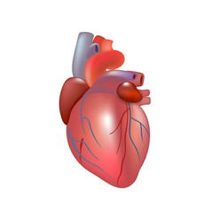 Human Heart Transparent Free Human Heart Transparent Png Transparent Images 42675 Pngio