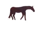 EARTH HORSE