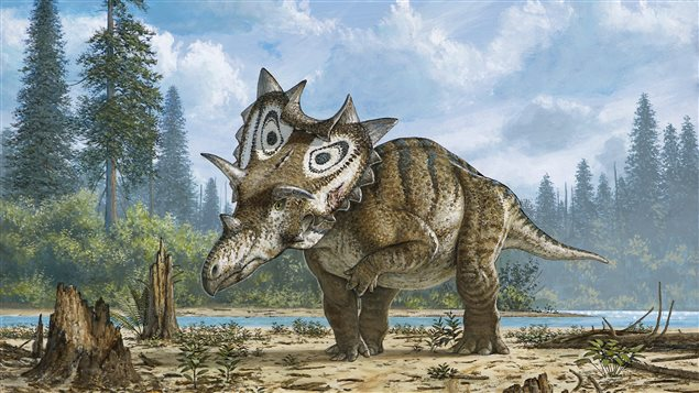 Représentation artistique du Spiclypeus shipporum, un dinosaure identifié par Jordan Mallon, du Musée canadien de la nature à Ottawa