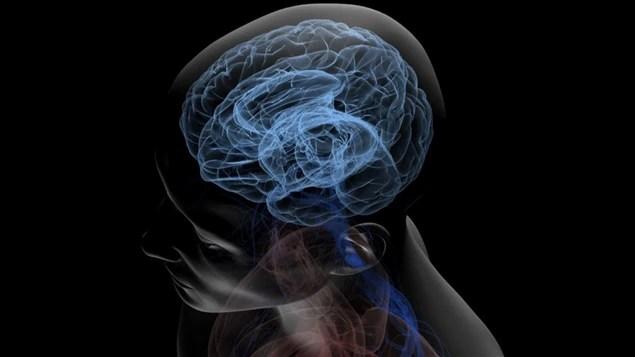 Le cerveau humain recèle encore bien des secrets.