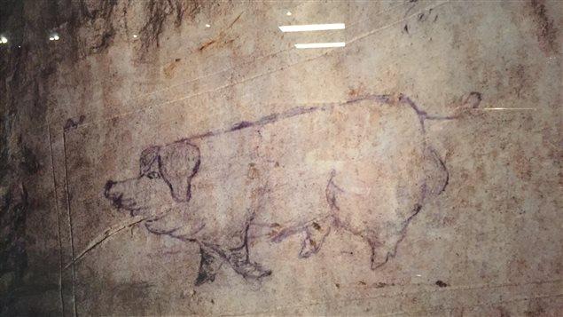 Un cochon gravé dans la pierre