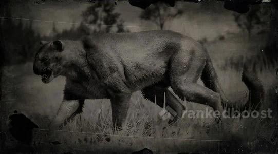 Red Dead Redemption 2 Legendary Animals Cougar