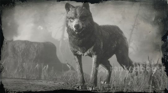 Red Dead Redemption 2 Legendary Animals wolf