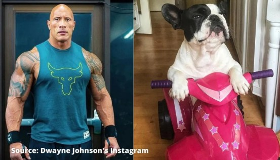 Dwayne Johnson Hobbs 'bulldog interrupts him at midnight;  The rock calls it a 'gremlin'