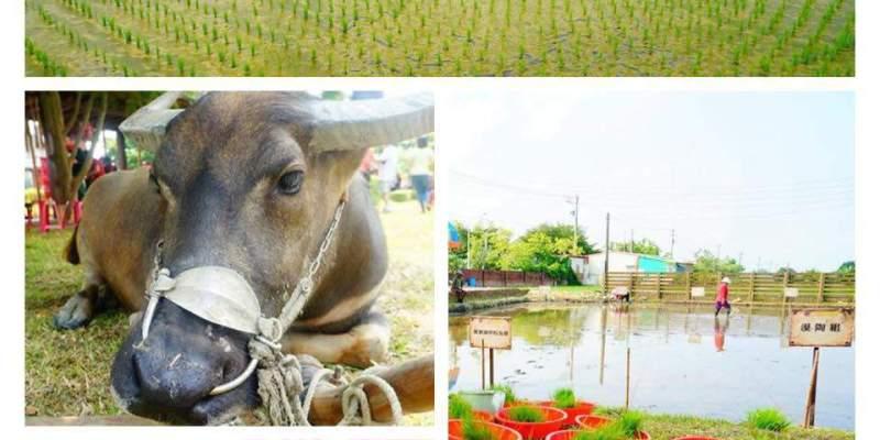 【景點*台南】 菁寮後壁 2015無米樂社區 插秧競賽  莊稼農村的美好時光