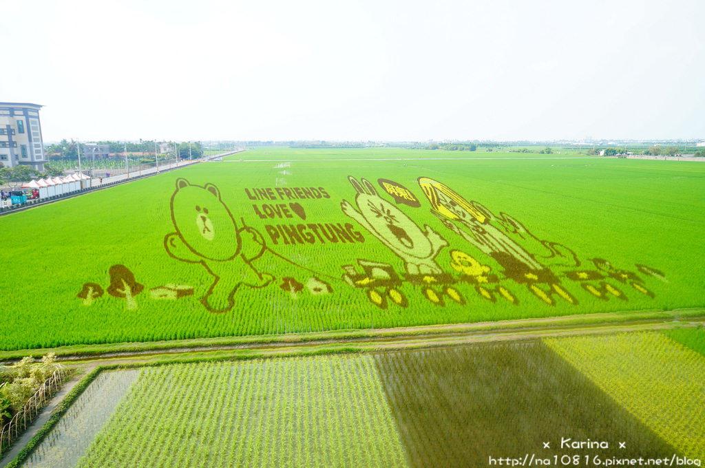 【遊記*屏東】南州x潮州  Line彩繪稻田攻略~跟熊大、兔兔一起玩!!* 心之和起士蛋糕~