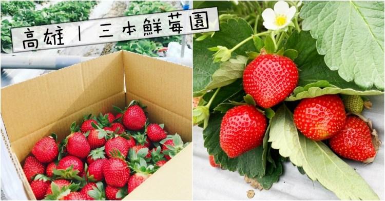 高雄採草莓 | 三本鮮莓園 阿蓮/大崗山 免入場費草莓園