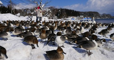 日本東北 旅遊 福島 豬苗代湖 野口英世紀念館 冬季必遊景點