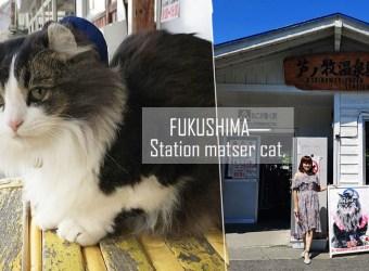 史上最萌車站長~蘆之牧溫泉站貓站長 吸金功力一流的貓站長!