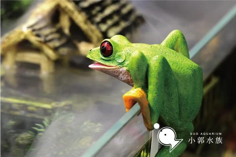 小郭水族【杯緣子-青蛙 】可掛在缸壁 精巧可愛 / SS-033 景品 動物 造景 紅眼樹蛙   露天拍賣