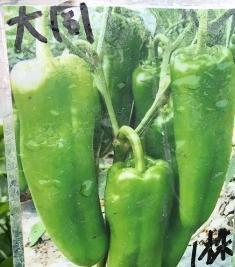 一禪種苗園-助於造血功能 菜苗-2.5吋盆 - 露天拍賣