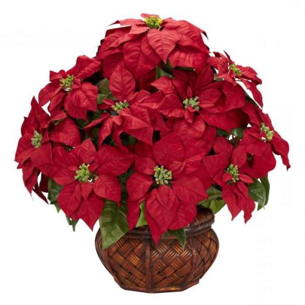 Красные Домашние Цветы Фото И Названия