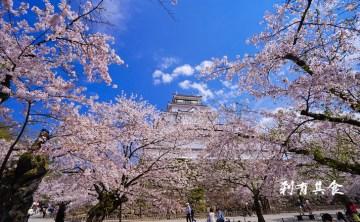 [東北賞櫻] 鶴城櫻花(會津若松城) 東北第一名城 福島必逛景點