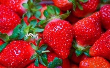 珍香草莓園 | 苗栗大湖美食 2018大湖親子採草莓首選!豐香草莓品種 又甜又脆好好吃!