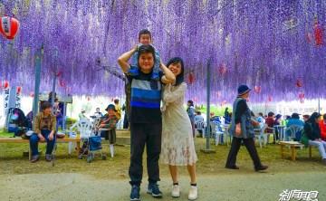 中山大藤 | 九州紫藤花 超夢幻紫色花雨 在紫藤花下野餐超幸福的啦 (花期為每年4月下旬)