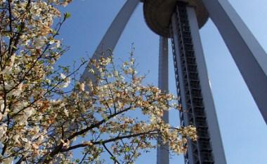 [愛知]犬山城附近悠閒賞櫻野餐好去處-木曾三川「138塔公園」