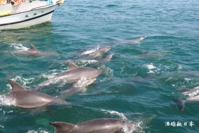 [熊本]天草賞海豚船(イルカマリンワールド)-近距離欣賞海豚群的新鮮體驗