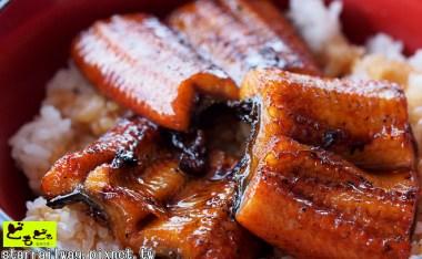 [高知]近距離感受四萬十川的味覺-「四萬十屋」鰻魚丼