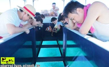 [沖繩]搭乘玻璃船,尋找NEMO蹤跡!