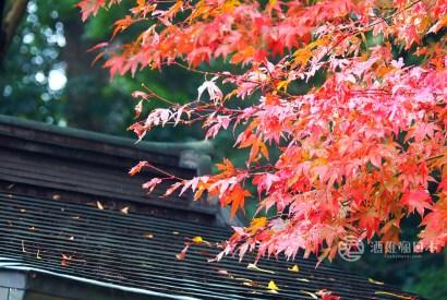 千葉JR常磐線小旅行-松戶兎に角拉麵與本土寺紅葉網美照