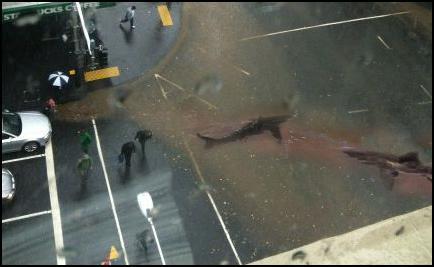sharks, street, flooding, Auckland, Queen St