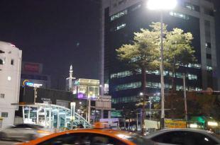東大門/DDP LED玫瑰展