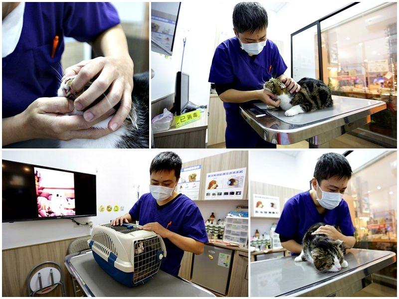 臺中 | 劍橋動物醫院 北屯推薦動物醫院 人要健檢寵物也要健檢 讓毛小孩能陪我們更久 - 雪倫情報局