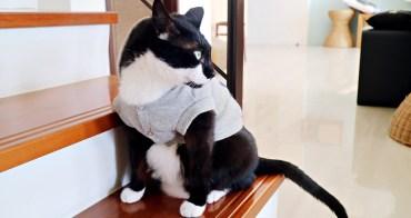 你家的貓會打呼嗎?