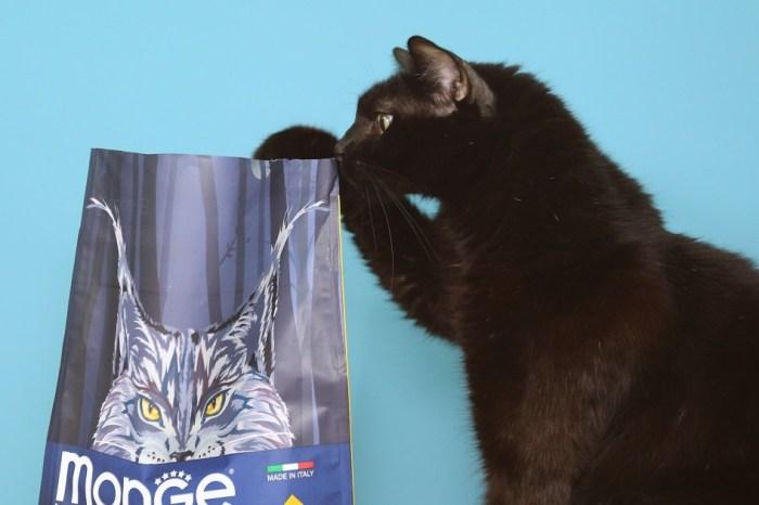 瑪恩吉真野低穀成貓兔肉  讓貓愛不釋口的義大利品牌Monge